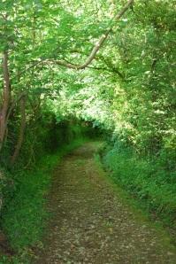 Lanes of north Devon
