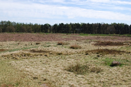 Cattle pen, hill fort or status symbol - Castle Ring, Cannock Chase