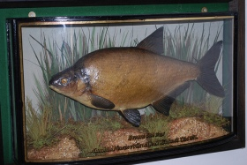 Bream on display at Izaak Walton's Cottage