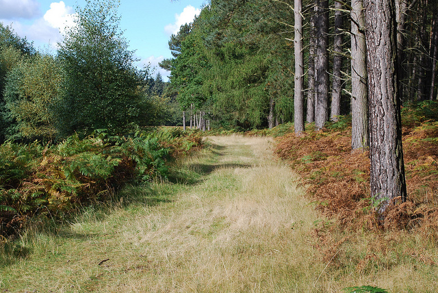 Stepping Stones, Cannock Chase - a short walk from the 825 route
